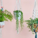 Suspension Plantes
